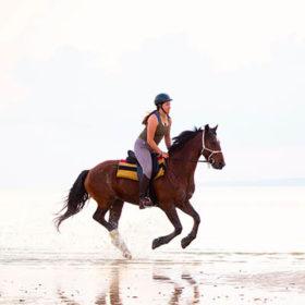Testimonial Mozambique Horse Safari