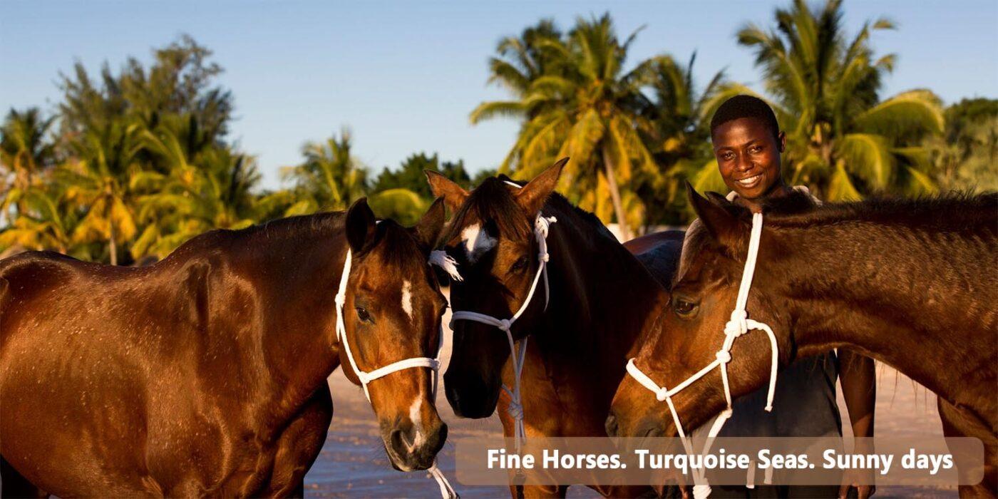 Mozambique Horses
